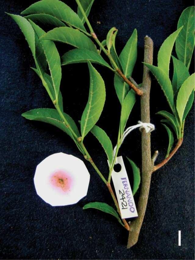 Обнаружено растение, питающееся металлом