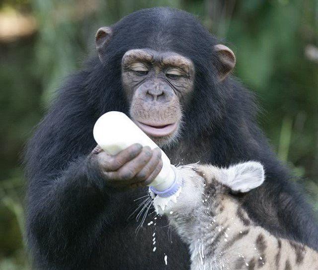 Животные обладают познавательными способностям, которые превосходят способности людей
