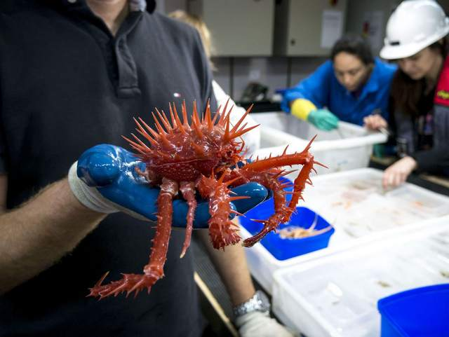Самые жуткие и удивительные существа, выловленные в водах Австралии