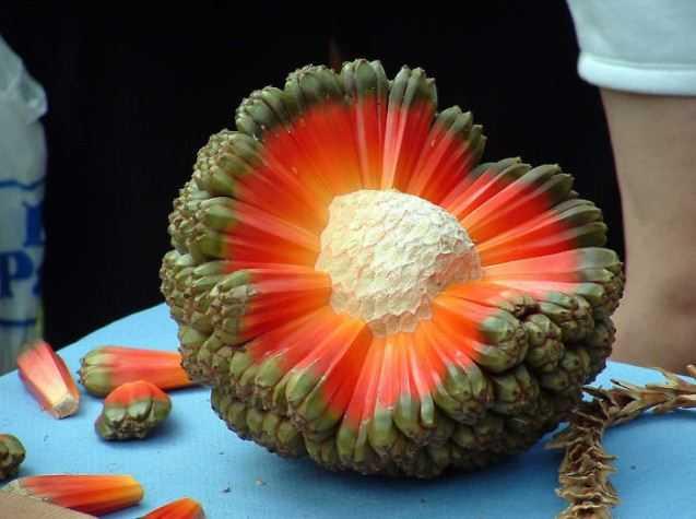 fruct-1.jpg
