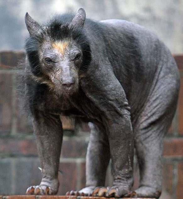 Теперь вы видели все: как выглядят лысые животные