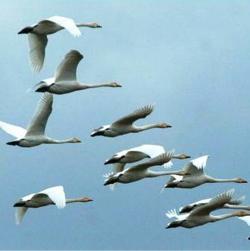 Летят перелетные птицы.  В оссенней дали голубой.  Летят они в жаркие страны, А я остаюся с тобой.