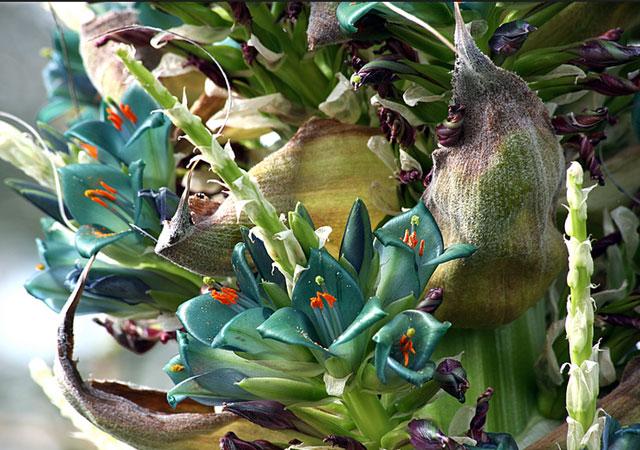 Удивительные растения с самыми редкими цветами