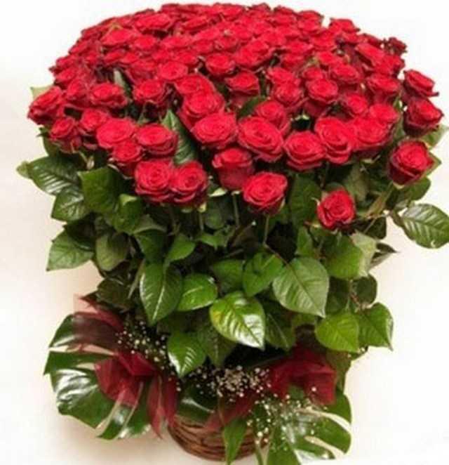 Комнатный цветок в подарок женщине