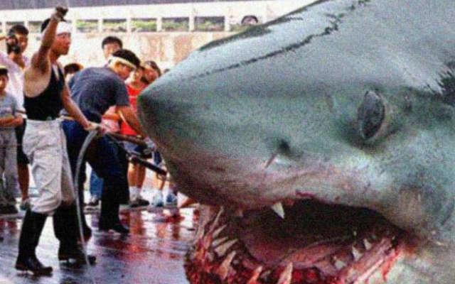 Shark. видео ловли мегалодон Мегалодон мегалодон фото.