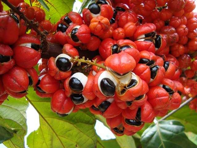 fructi-10.jpg