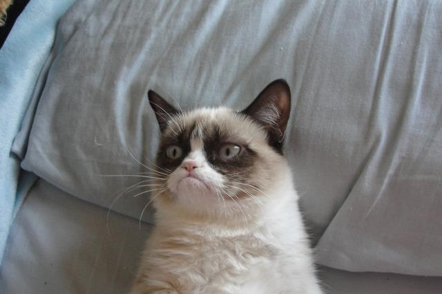 Кошки узнают голос своих хозяев, но предпочитают игнорировать