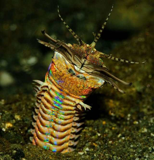Невероятные морские существа, похожие на пришельцев