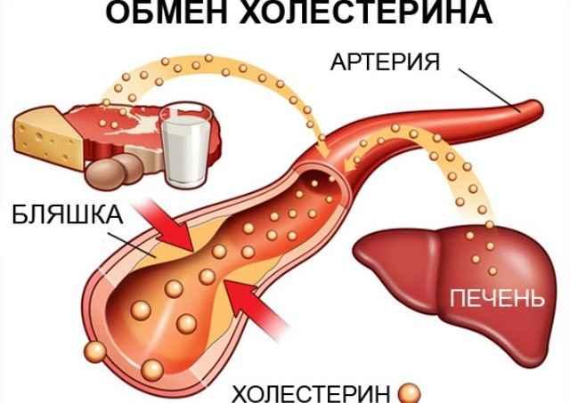 Вред продуктов на организм человека. D781c28b8f3106c30c844a5dc48baf8c