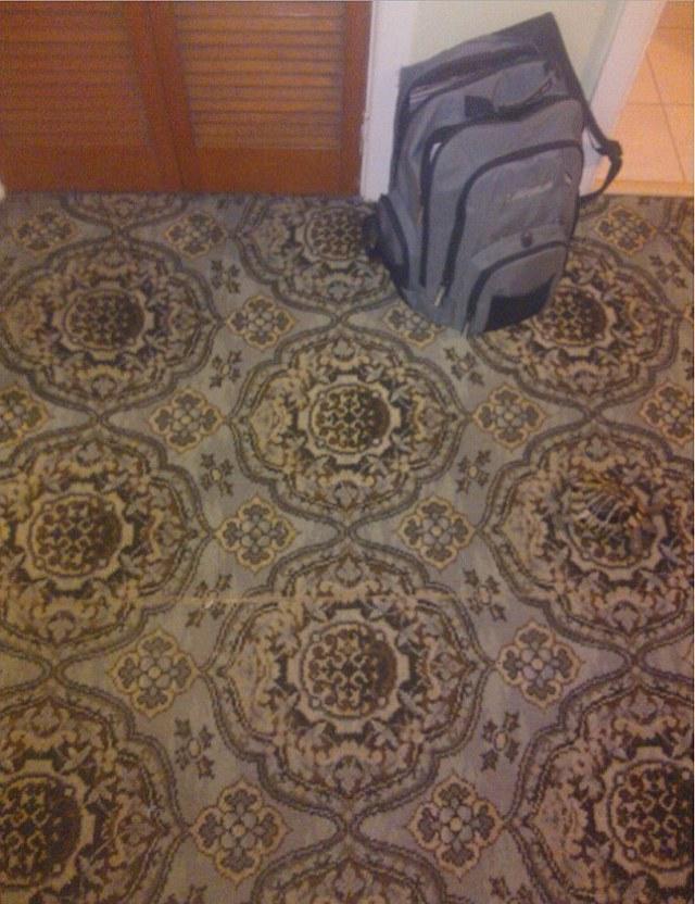 Картинка-загадка: найдите черепаху, отдыхающую на ковре