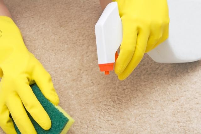 Вывести запах кошачьей мочи с ковра в домашних условиях