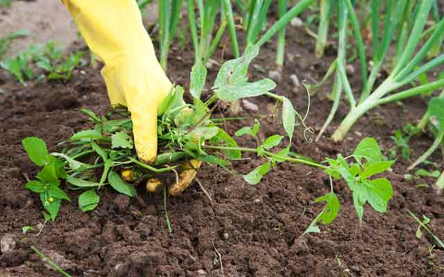 plants0516-14.jpg