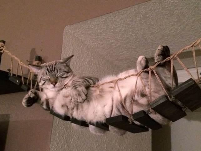 Гамак для кошки своими руками фото