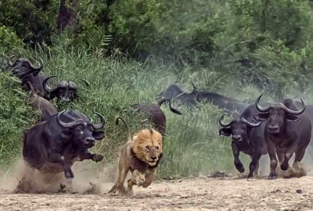 Как выжить при нападении самых опасных животных
