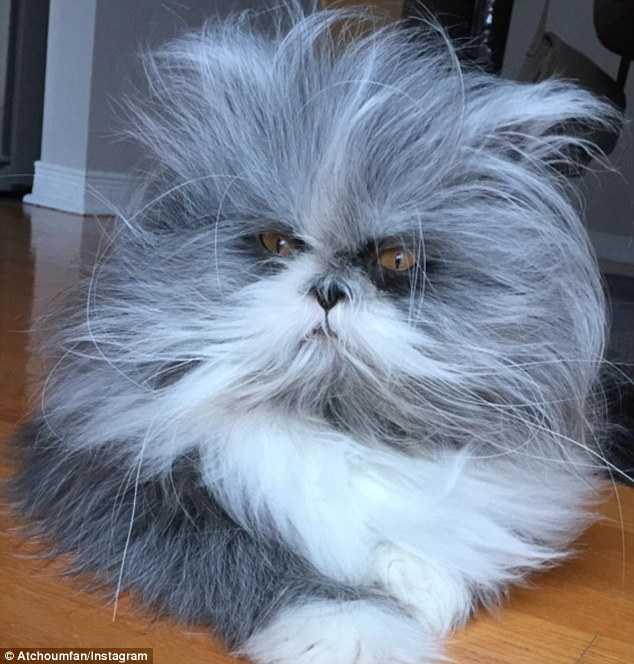 Пользователи в замешательстве: это кошка или собака?