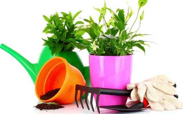 plants0516-10.jpg