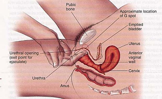 Оргазм влагалищя фото фото 166-468