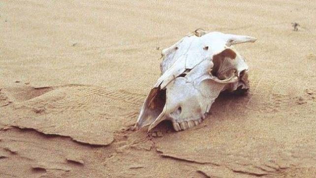 Мы находимся на грани 6-го массового вымирания
