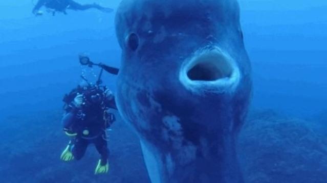 Самая большая костная рыба в мире